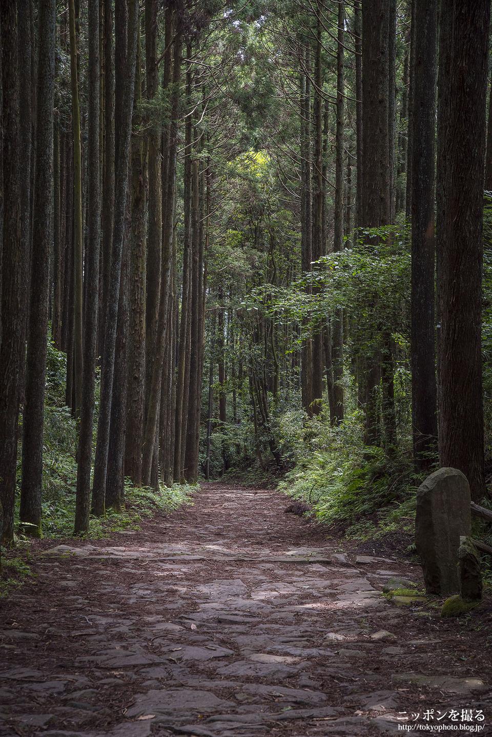 山中城跡と箱根旧街道_0063