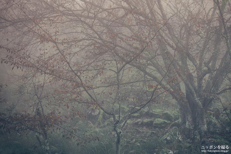 13_森は霧が出ていると映画のような雰囲気になる