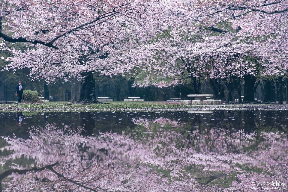 46_東京_練馬区_光が丘公園