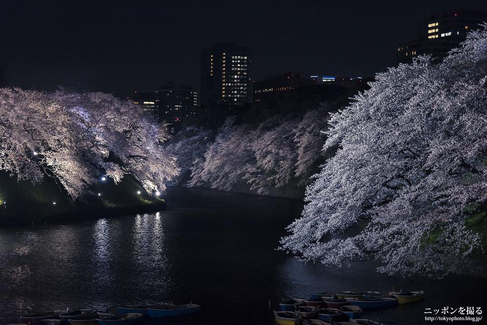 千鳥ヶ淵_夜桜_0005