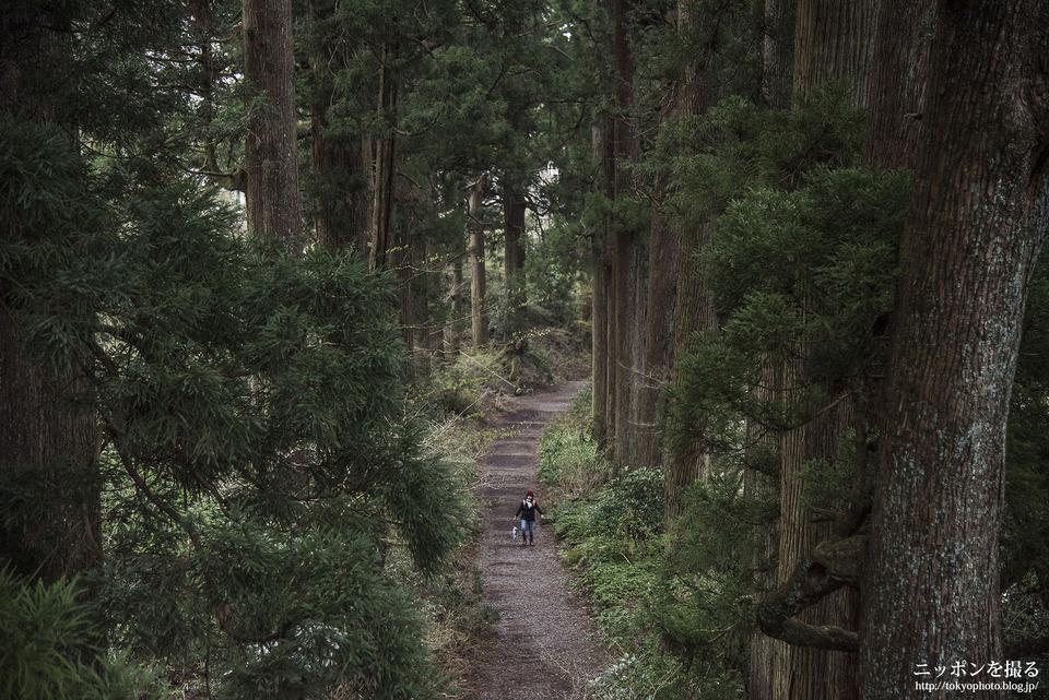 箱根旧街道_0418