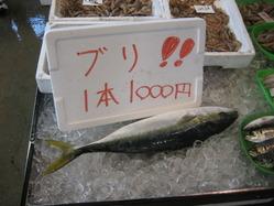 真魚市02