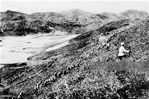 ((((R丘への攻撃中に鎖を形成するロシア兵-1904年夏