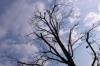 0213 冬の街路樹