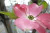 110422 咲く花