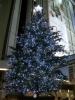041116xmas-tokyutree 渋谷のクリスマスツリー