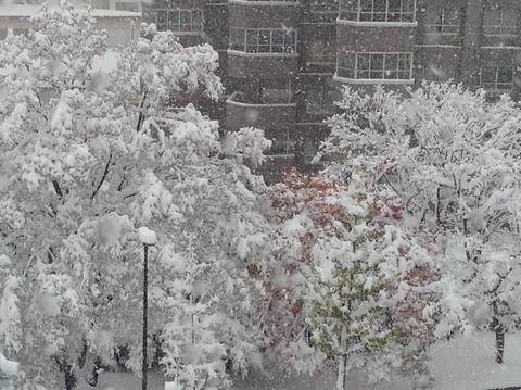 161106 けなげな紅葉大雪