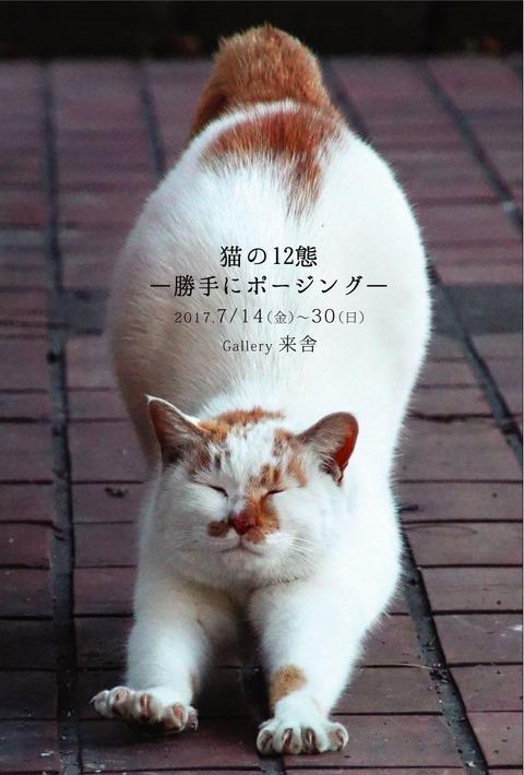 th_猫の12態/表画像