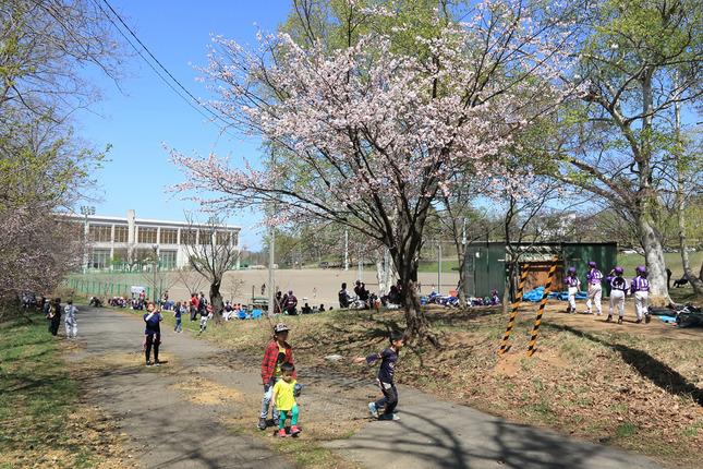 17.06.14-25【告知】今年の小樽の桜の写真展 Vol.22