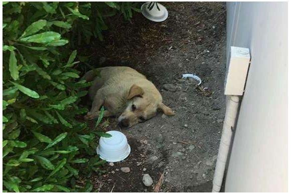引っ越しの時に置き去りにされた犬が、もう一度人と共に第二の犬生を望むまで(アメリカ)