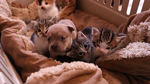 「1匹増えても、どんとこい!」生まれたばかりで孤児となった子犬を、子猫に混ぜてみたところ…