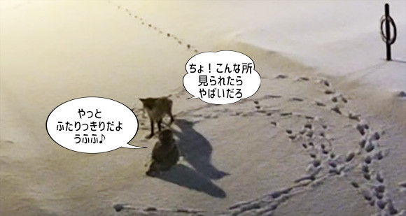 こんな文春砲ならいい。シロフクロウとキツネが深夜の密会。異種愛の現場を激写とかか?(カナダ)