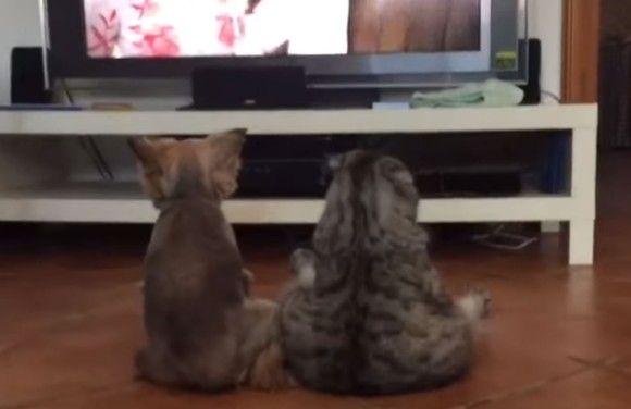 ヒト化が進む。犬と猫が仲良くならんで座りながらのテレビ鑑賞