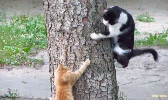 割とスパルタ?猫のお父さん、子猫に木登りを教えて、いるのか?