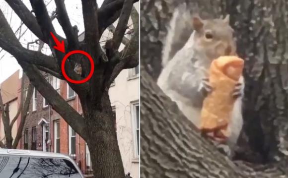 やはりニューヨークだったか。木の上で春巻きを食べるリスがネットミームに(アメリカ)
