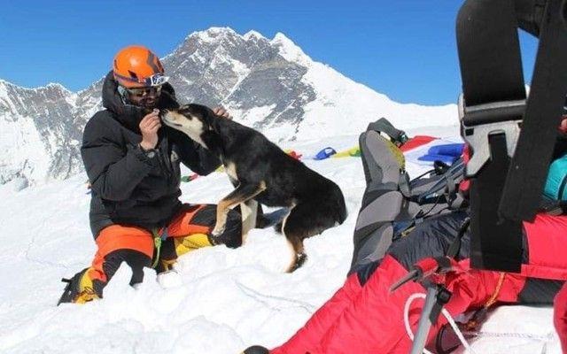 犬界初か。登山隊にくっついて、ヒマラヤにある山を登った犬のメラ