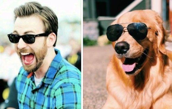 やっぱみんな思ってた!似てるよね?クリス・エヴァンスとゴールデンレトリバー。ではそっくり写真を並べてみよう!