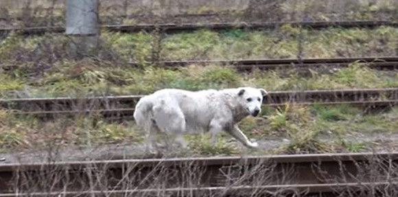 線路をさまよっていた老犬、マイクロチップで身元が判明するも飼い主が引き取りを拒否。だが幸せはその先にあった。