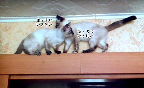 猫2匹がすれ違うには狭すぎた。どうしても前に進みたい猫たちのとった解決策は?