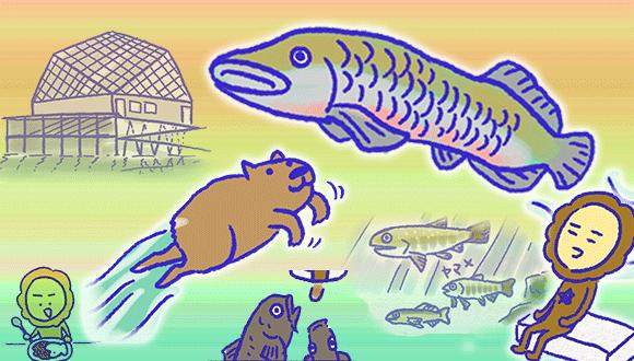 アレな生態系日常漫画「いぶかればいぶかろう」第42回:淡水魚がいっぱい!栃木県のなかがわ水遊園に行ってきたよ!