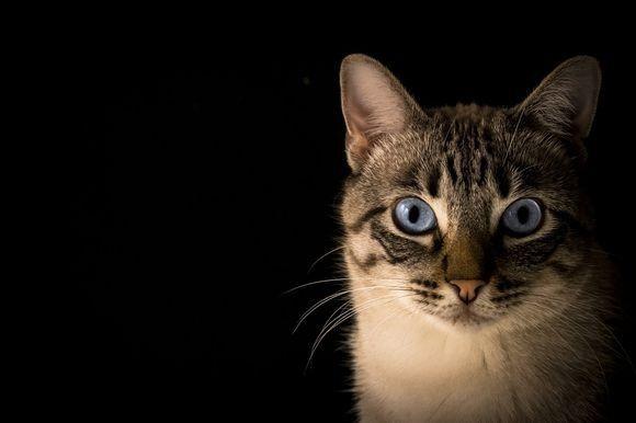 動物病院に行く猫のストレスを癒すため、ペットフード会社がオンラインラジオ局を開設(ネット上でも聞ける)