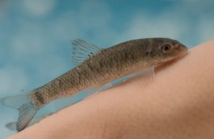 docter-fish