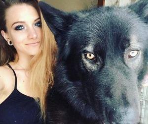 wolfdog_01-min