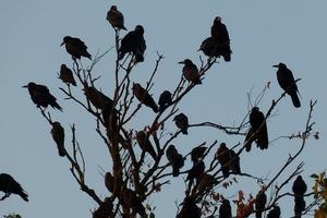 birds-705043_640-e1435907544371