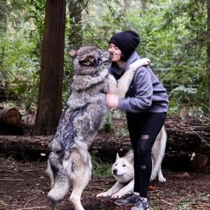 wolfdog_07-min