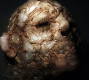 Horrifying-Monsters-4_s[1]