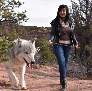 wolfdog_23-min