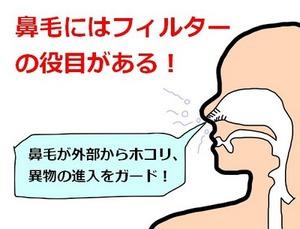 hanage-yakuwari1