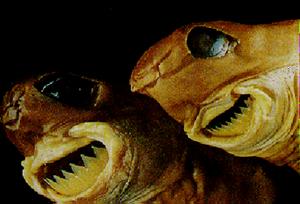 不気味-歯-動物-11