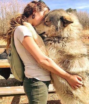 wolfdog_19-min