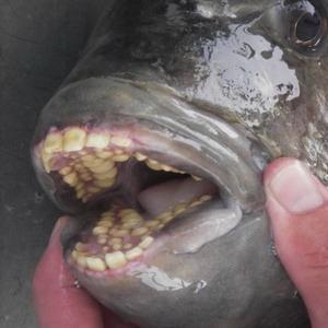 不気味-歯-動物-22
