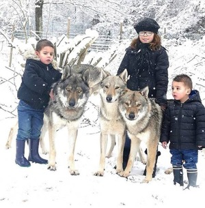 wolfdog_04-min