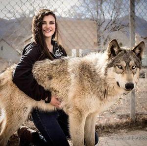 wolfdog_17-min