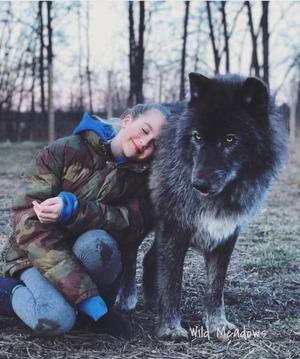 wolfdog_20-min