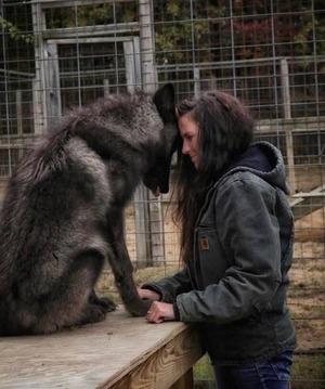 wolfdog_05-min