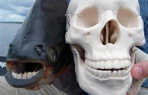不気味-歯-動物-23