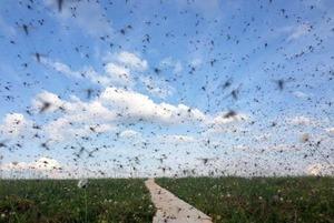 komary-v-voronezhe_06
