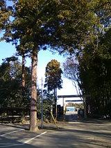 八街神社の鳥居と木々