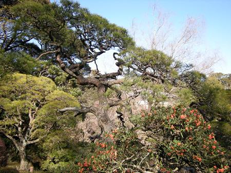 成田山公園の木々
