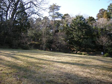 成田山公園の芝生