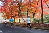マラソン紅葉2