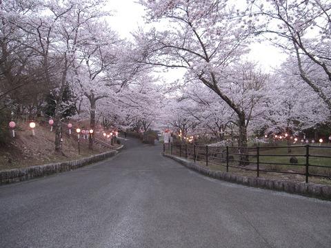 夜桜公園入口