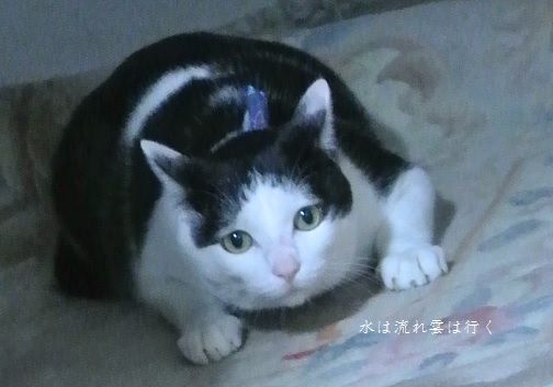 yamato855.jpg