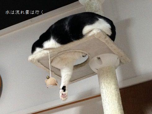 yamato816.jpg