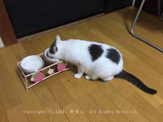 fukumaru249
