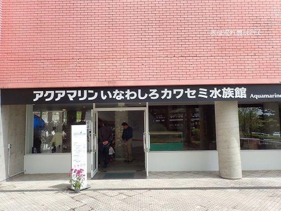 kawasemi150501.jpg